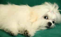 Fotografias Mascotas (1)