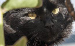 Fotografias Mascotas (2)