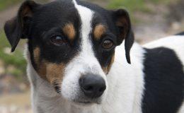 Fotografias Mascotas (3)