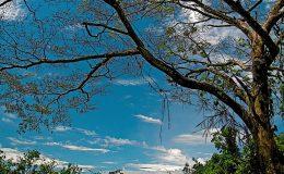 Fotos naturaleza (4)